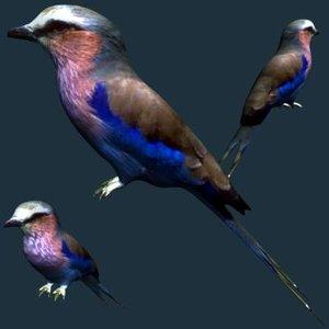 bird 3d model