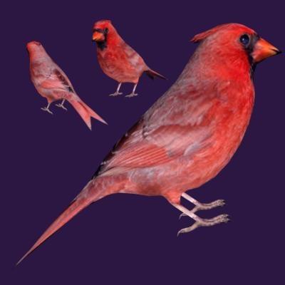photorealistic bird 3d model