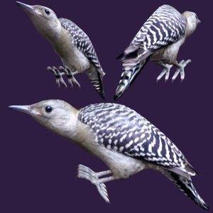 3d model redbellied woodpecker fledgling