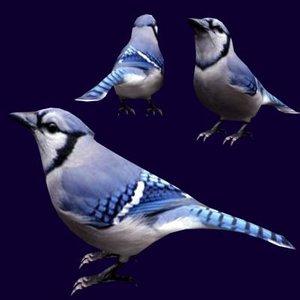 3d bluejay model