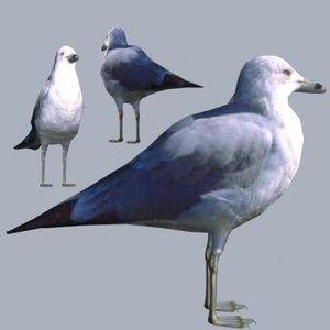 bird max