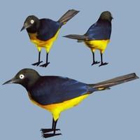 Bird35