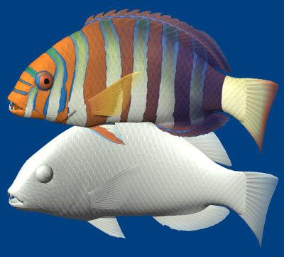 harlequin tuskfish 3d 3ds