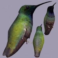 bird 3d max