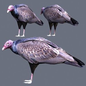 3ds turkey vulture
