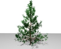 red pine tree 3d model