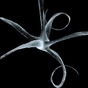 neuron cell receptor neural 3d 3ds