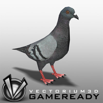pigeon animal 3d max