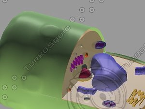 vacuole chloroplasts 3d model