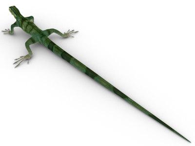 iguana lizard obj