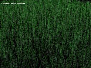 grass gras 3d model