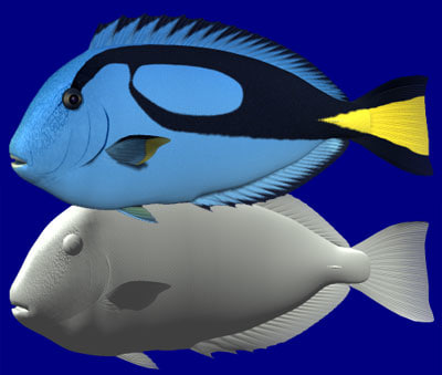 blue tang palette surgeonfish 3d model