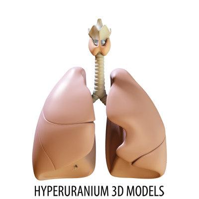 respiratory bronchus windpipe 3d model