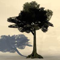 Big_tree4.zip