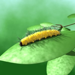 caterpillar leaf max