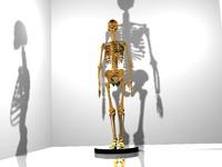 female skeleton 3d 3ds