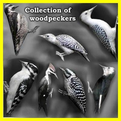 3d woodpeckers