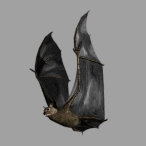 maya bat