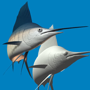 3d indo-pacific sailfish model