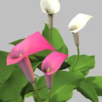 3ds calla lillies