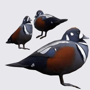 3ds max harlequin duck