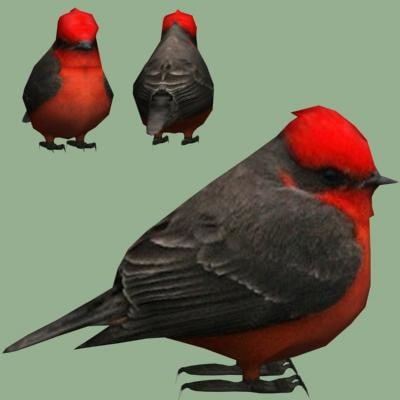 3d model vermilion flycatcher