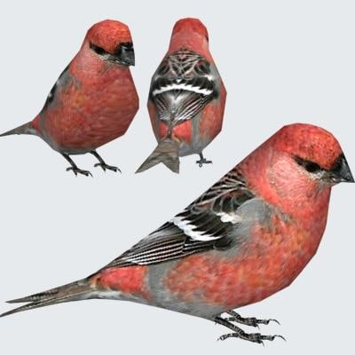 3d pine grosbeak model