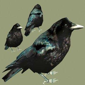american crow 3d max