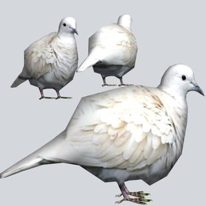 3d model eurasian collared dove