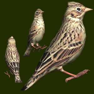 vesper sparrow 3d 3ds