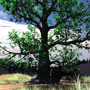 3d model black oak