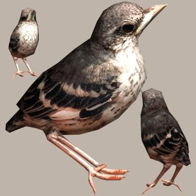 3dsmax bird