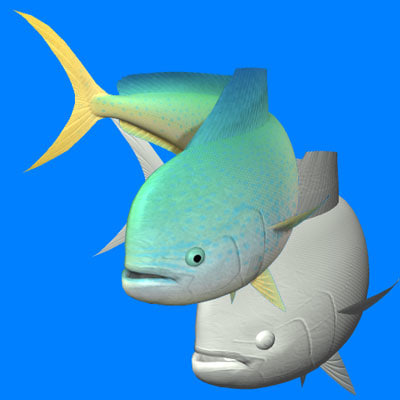 3d common dolphinfish model