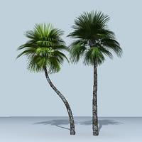 palm_tree_02.zip