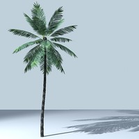 palm_tree_03.zip