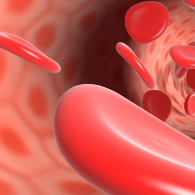 3d blood cells model