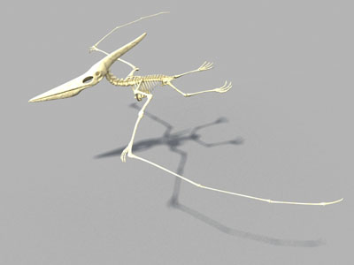 pteronodon skeleton bone dinosaur 3d model
