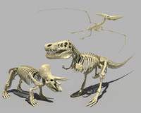 t-rex skeletons 3d model