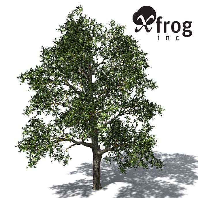 xfrogplants breadfruit tree 3d model