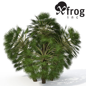 mediterranean fan palm plant 3d model