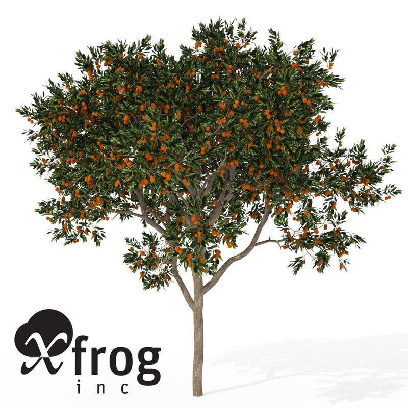 xfrogplants sweet orange tree 3d model