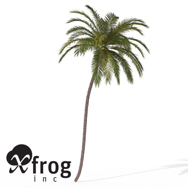 coconut palm tropical plant 3d model