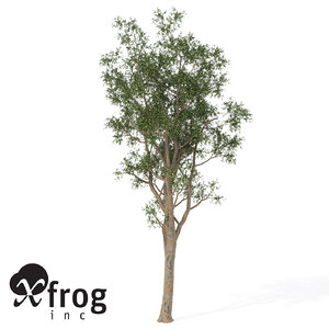 bluegum eucalyptus tree planted 3d model