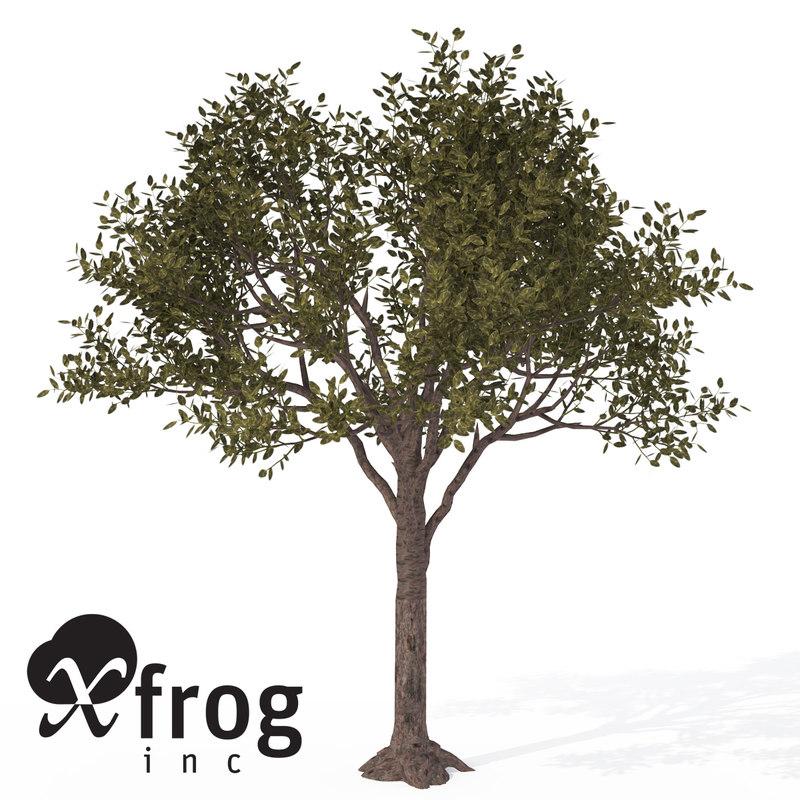 rubber tree plant 3d model