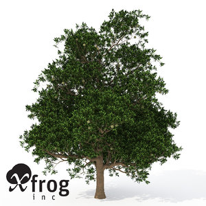 3d model xfrogplants macadamia tree tropical plant