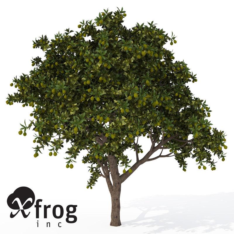 mango tree tropical plant 3d model
