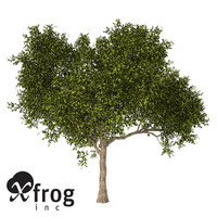 XfrogPlants Avocado tree