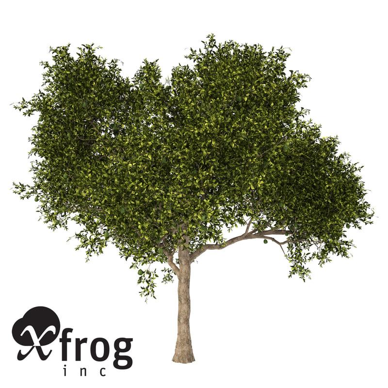 xfrogplants avocado tree tropical plant 3ds