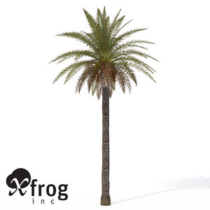 canary date palm plant 3d model
