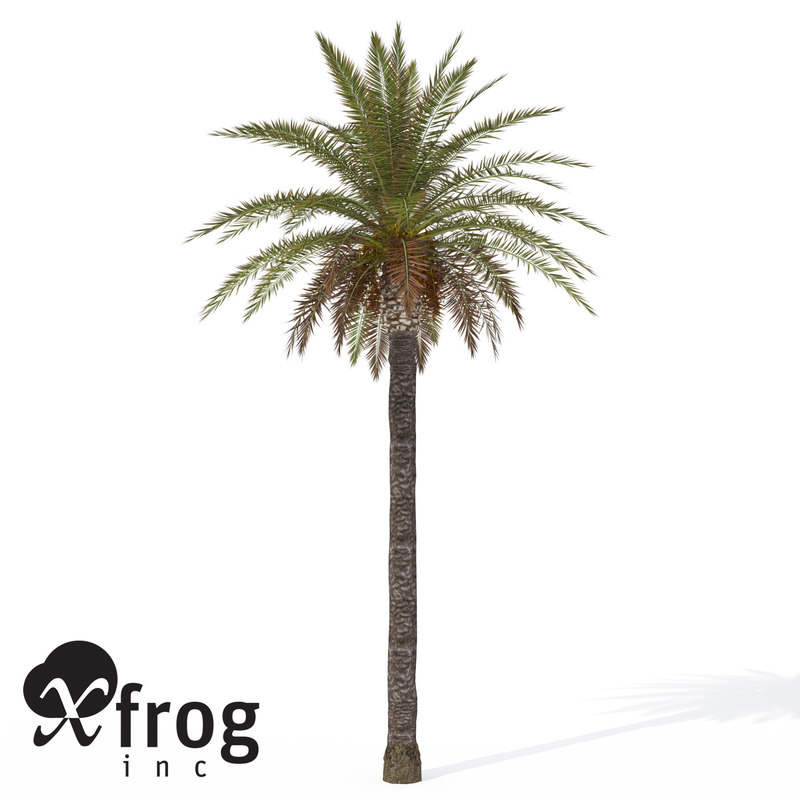 Palm Tree 3D Models for Download | TurboSquid